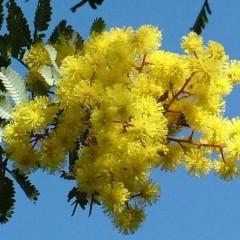 Bollettino dei pollini